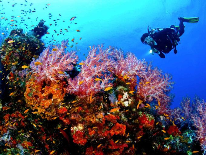 Diving In Costa Smeralda Sardinia (italy)